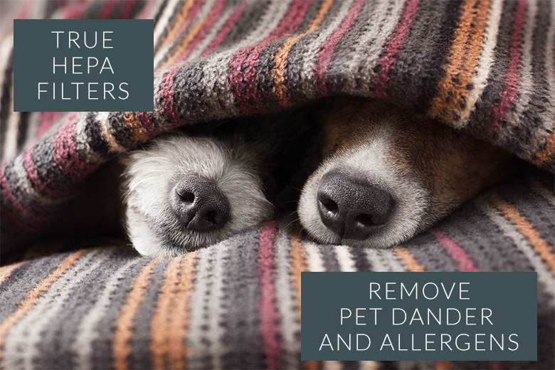 True HEPA Filters remove pet dander, hair, and allergens